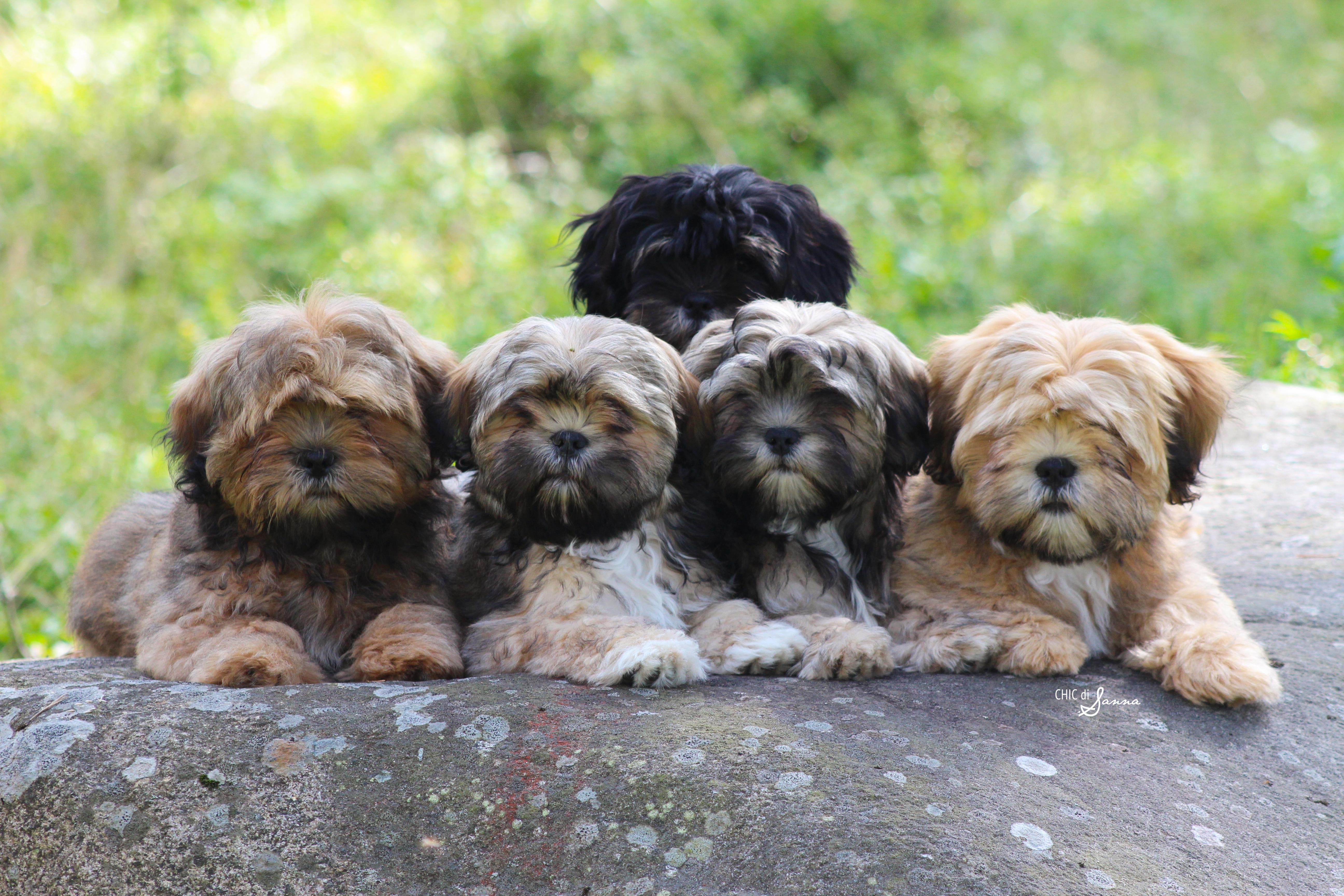Koirankasvatus murroksessa – rotuja on liikaa