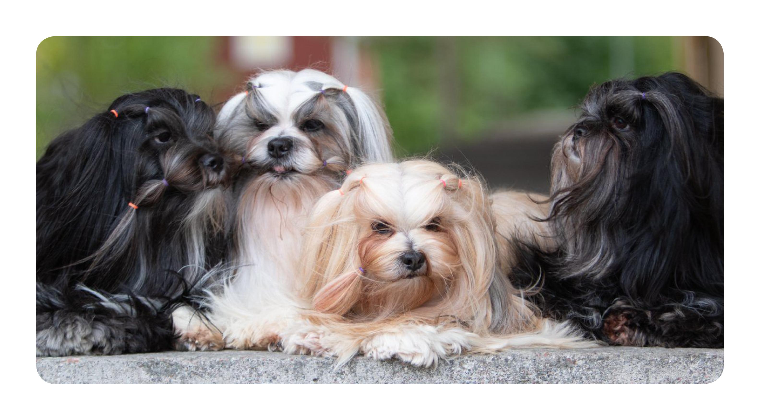 Koirien ikä on kasvatuksessa tärkeimpiä työvälineitä – koirien kuolema voi kertoa niin paljon