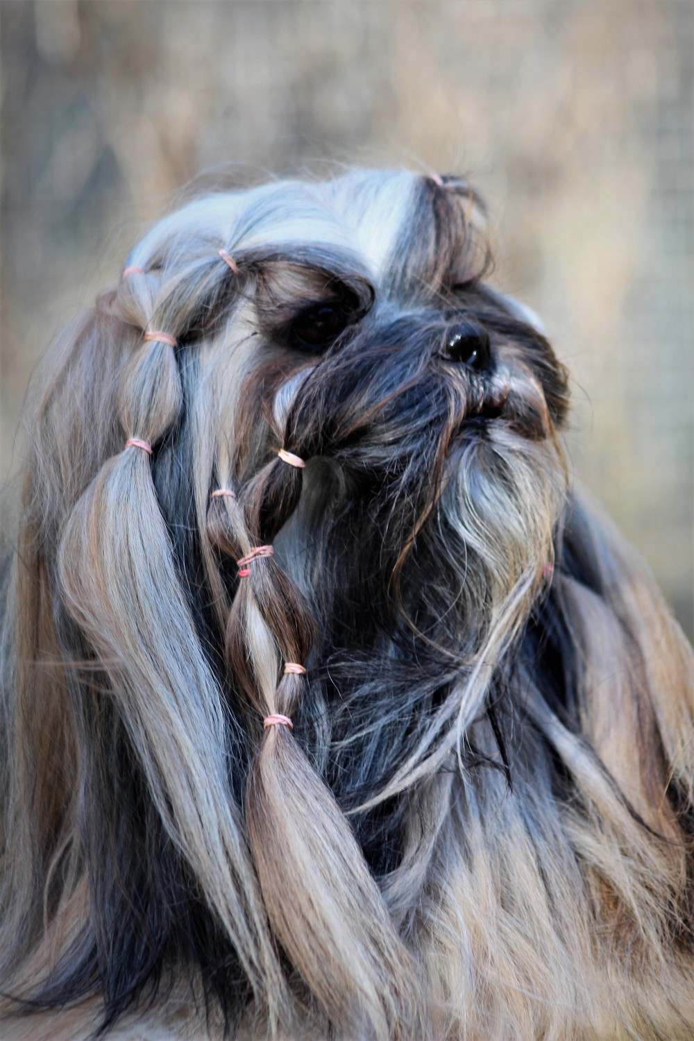 We should stop shortening the muzzles/heads of many breeds – time to look back