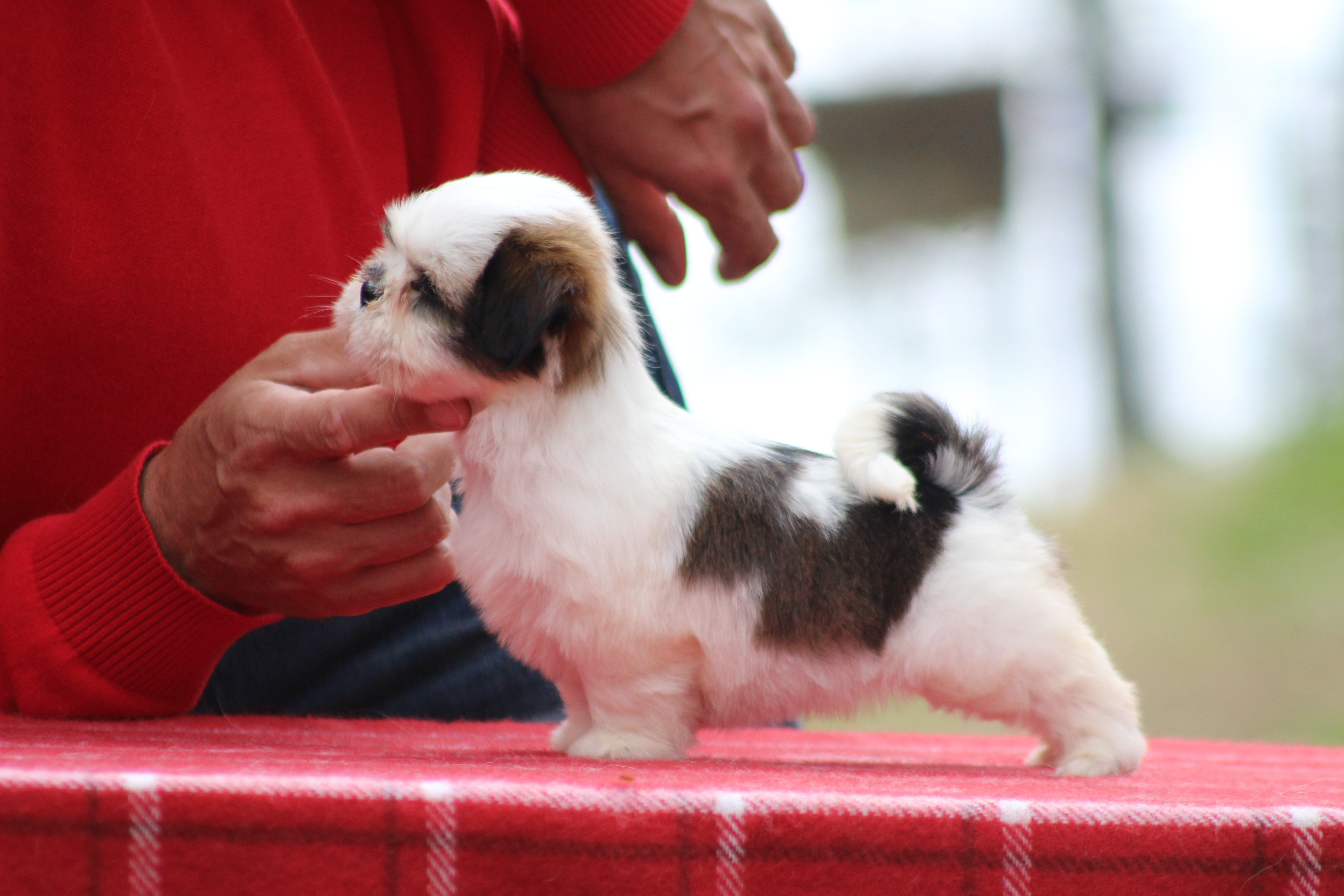 Pedigree dogs are all about pedigree – it is a code to success