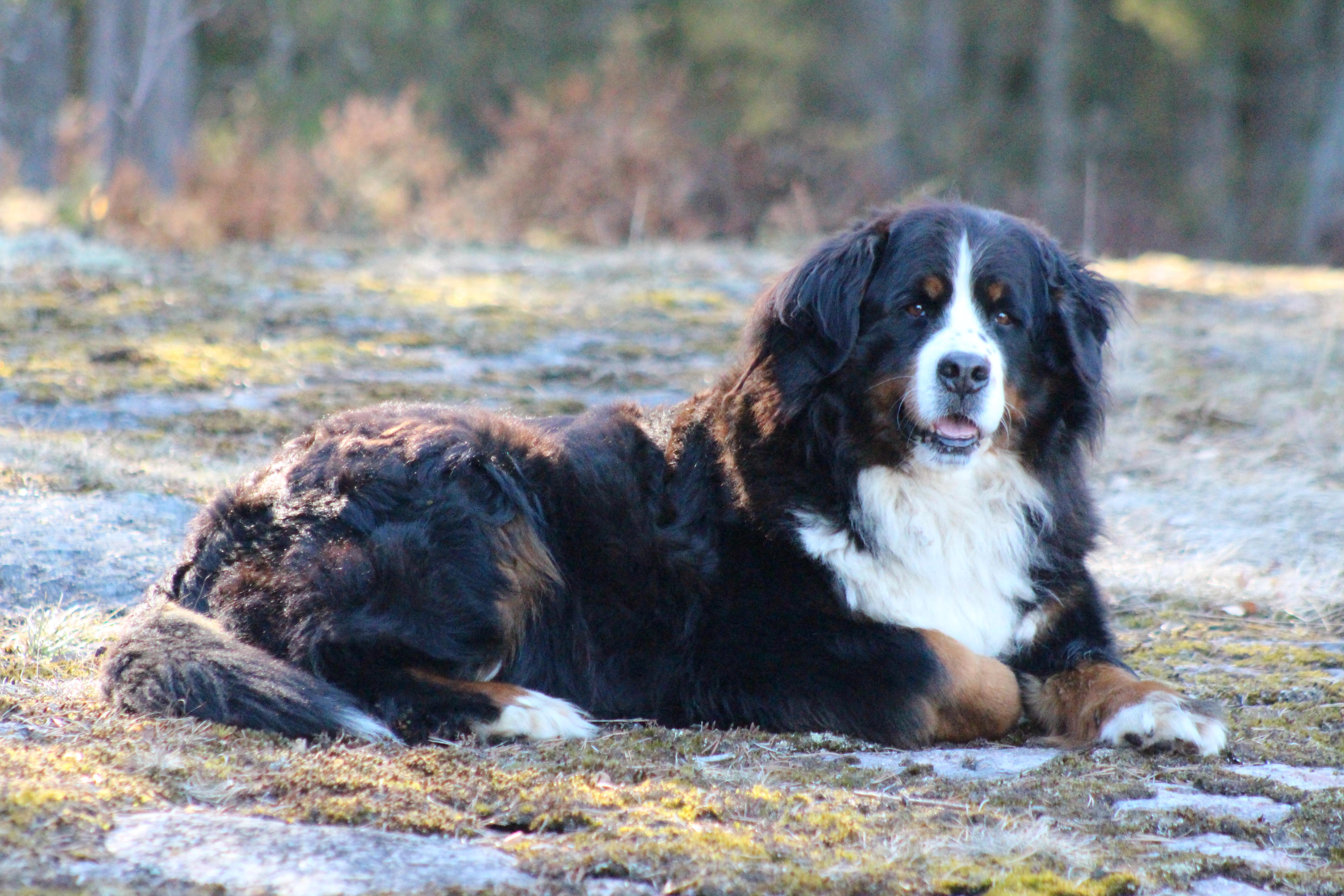 Mitä koira voi parhaimmillaan olla? Kunnianosoitus maailman ihanimmalle koiralle