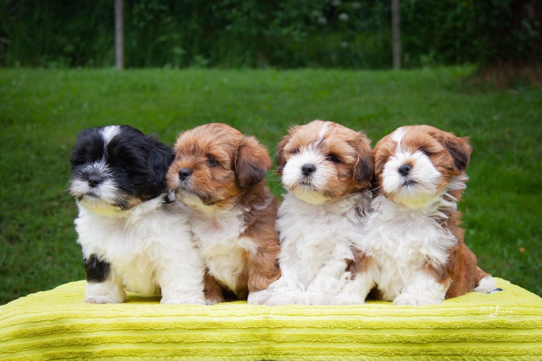 Summer puppies 2020 in Finland