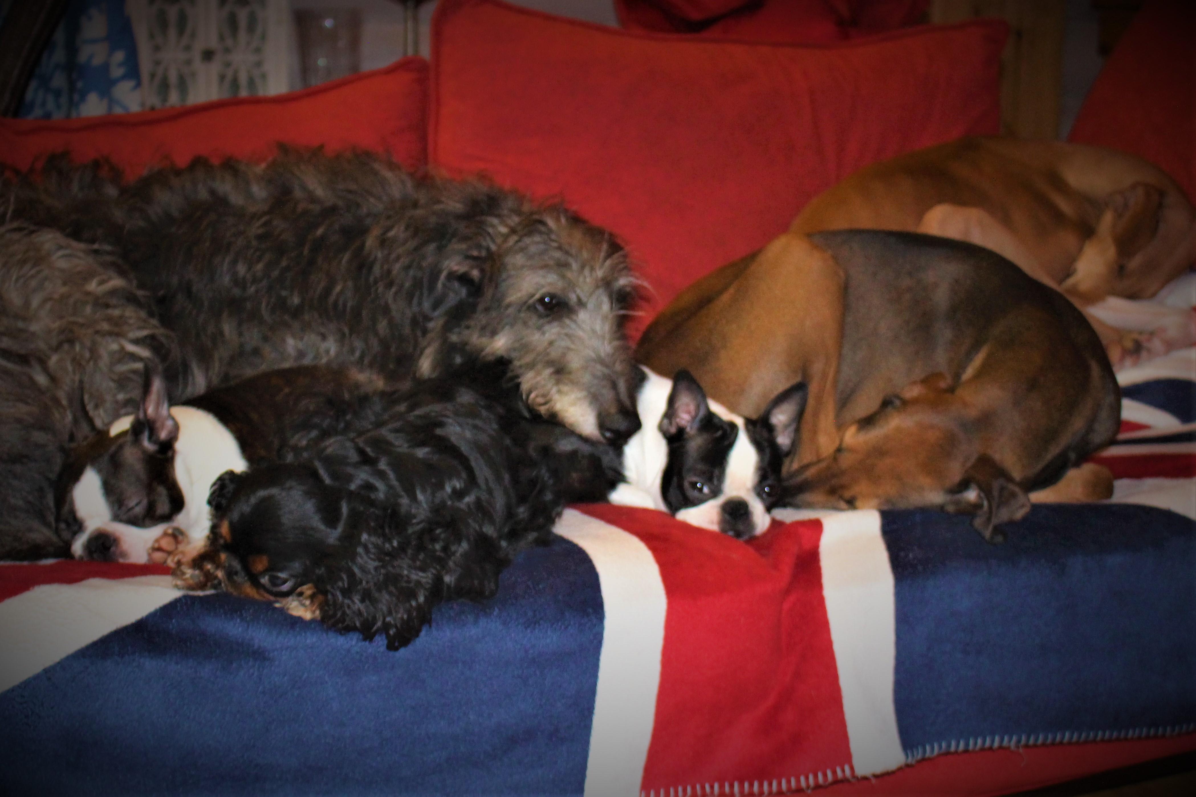 Rakkaudesta koiraan……………….